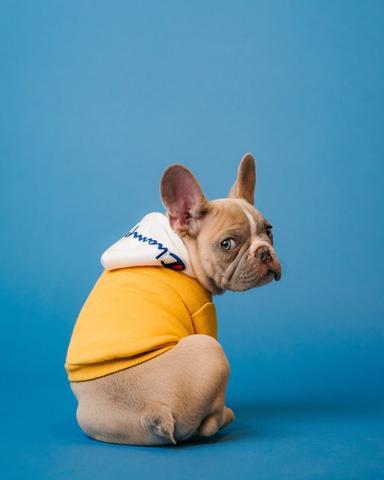 french bulldog constipation